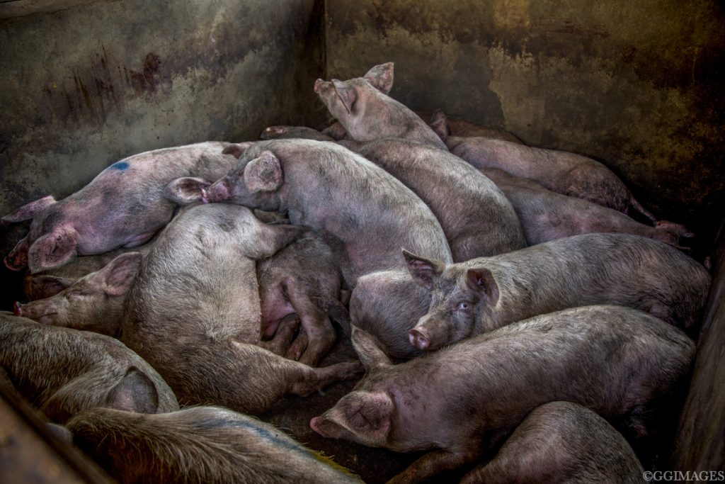 Kenya. Dagoretti slaughter house, August 2018