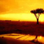 Sunset rain Masai Mara