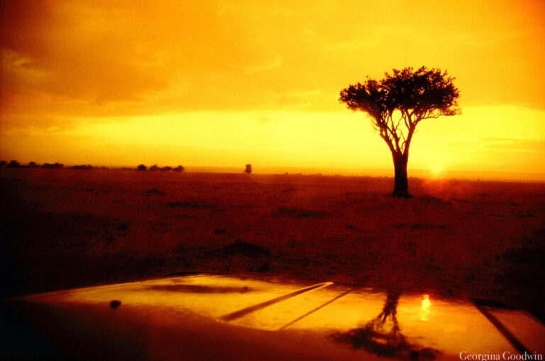 sunset rain masai mara kenya landscape nature
