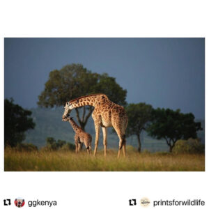 Read more about the article Prints For Wildlife